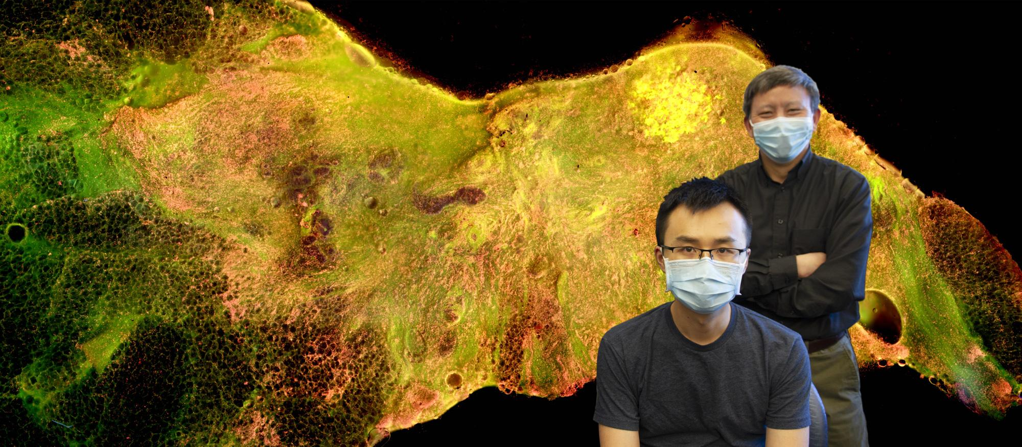 Dr. Yu and Tongtong Lu pose in front of sample image created in their lab.